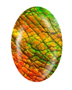 File:Ammolite.png